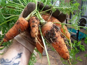 My favourite carrot variety!