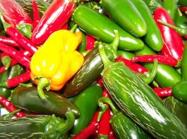 Bumper chilli crop!
