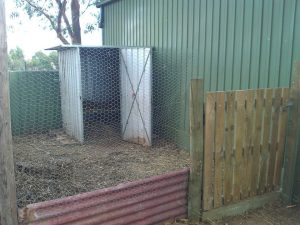 Reclaimed poultry area with dad's gate and the recycled shed.