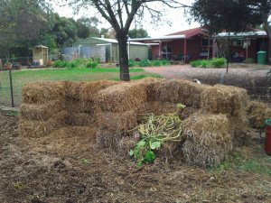 Compost bays made of pea straw!