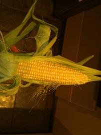 The corn was an unexpected success.