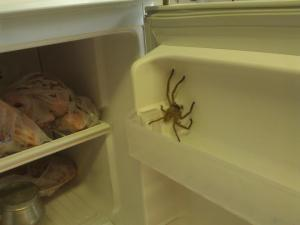 Not sure how he got in the freezer, but he was not happy about it.