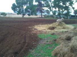 Ploughed paddock!