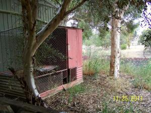 Horribly maintained chook coop and run.