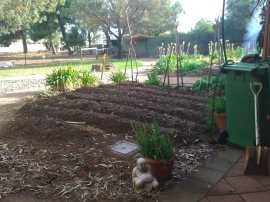 Second reclaimed veggie area.