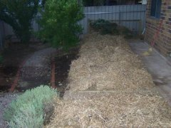 Reclaiming a paved area as veggie patch - mulched.