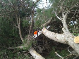 Poor stuck chainsaw...