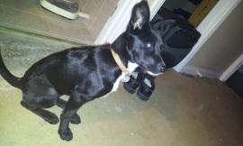 Tatyl dog!