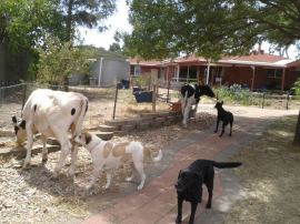 "The cows snuck into the back garden. Bruce was all over it though. And by ""it"", I mean their butts."