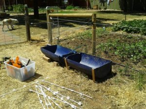 More reclaimed drums being used as stock troughs. The whole drum cost us $18.