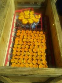 Home-grown apricots and store-bought peaches in the dehydrator.