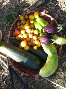 Summer Harvest! BooYa!!!!!