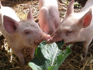 They love leafy greens!