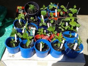 Seedlings coming along.