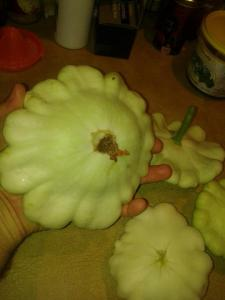 We ended up getting dinner plate sized squash!