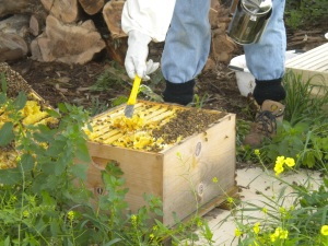 Scraping away... pissing off thousands of bees...