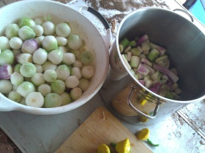 This is about a third of the pickling onions, salted and ready for pickling tomorrow.