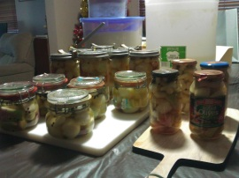 One of our pickled onion runs.