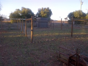 New meat chooks runs - the shed is closer to the road, and there are two runs we can alternate them in.