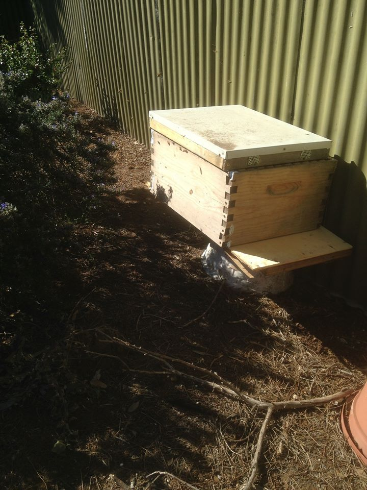 Step 2 - put on the super so the bees need to go in and out via it.  We have no idea what Step 3 is...