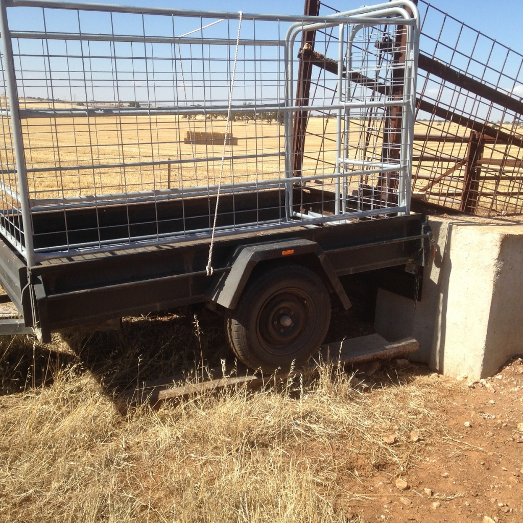 Stock trailer on a temporary trailer ramp. Farmgenuity at its greatest!