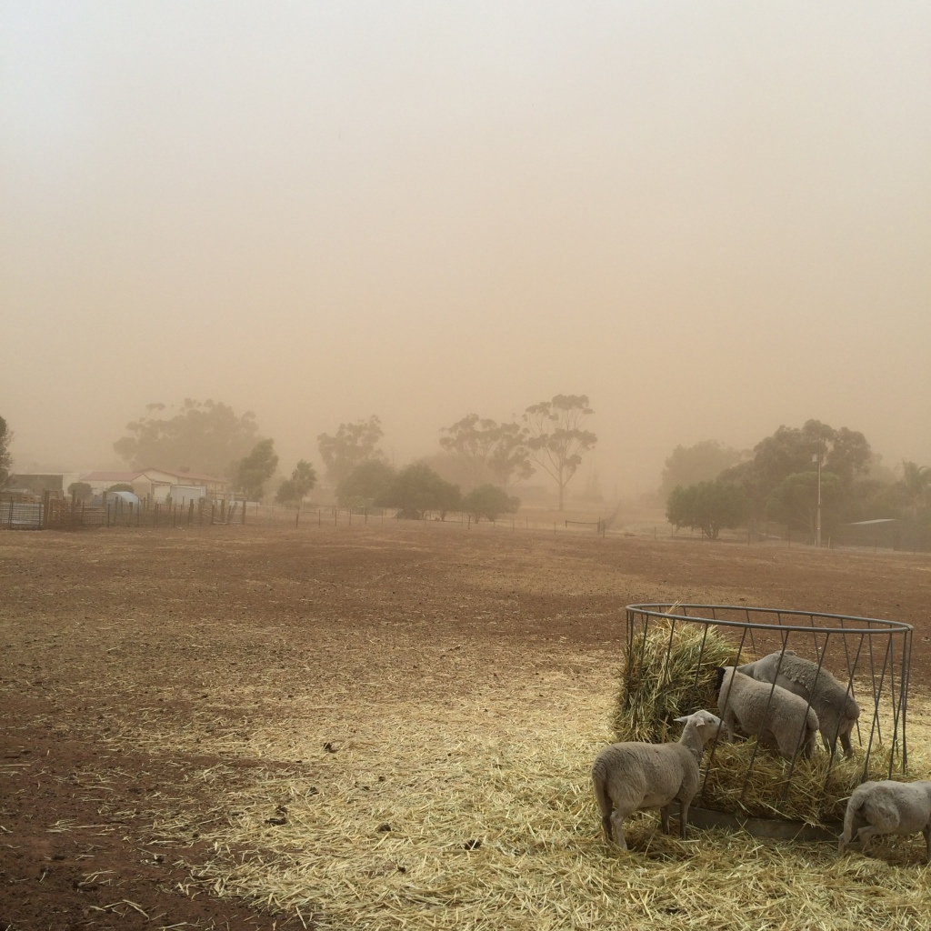 The back paddock, facing east, during one of the many, many dust storms.