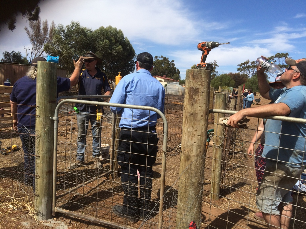 This is dad high-fiving our good mate Mark, who built our pig shelters.