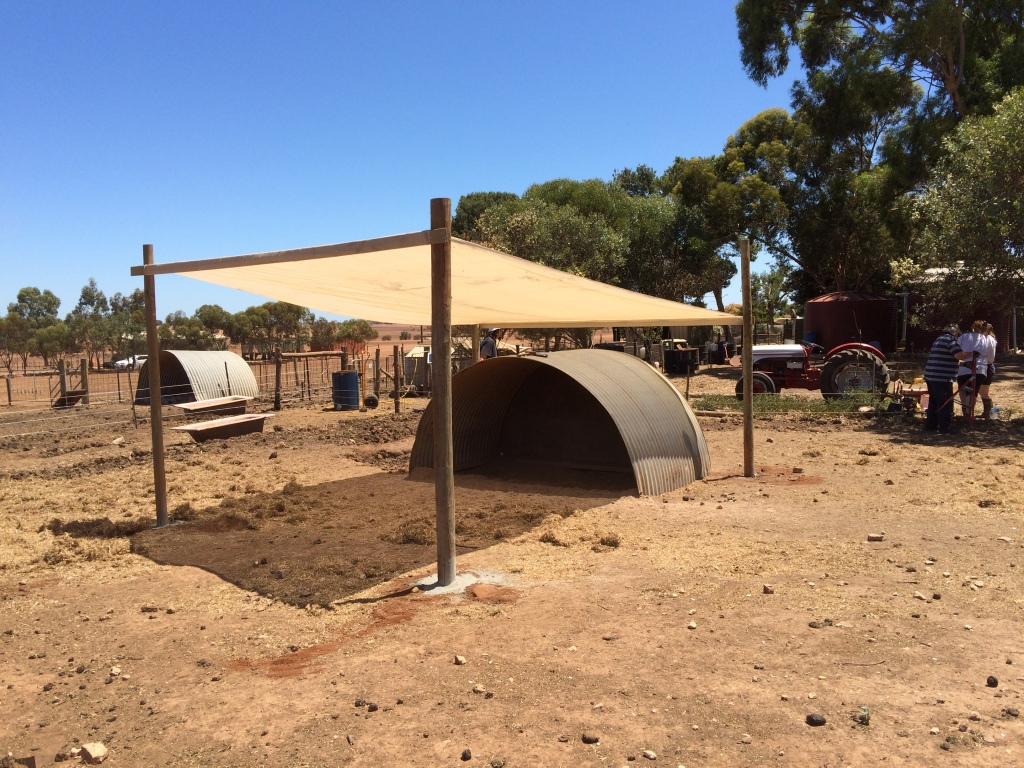 This is one of the improvements we've added since the fires. We've done the same over one of Mark's pig shelters, and probably will over the other one too.
