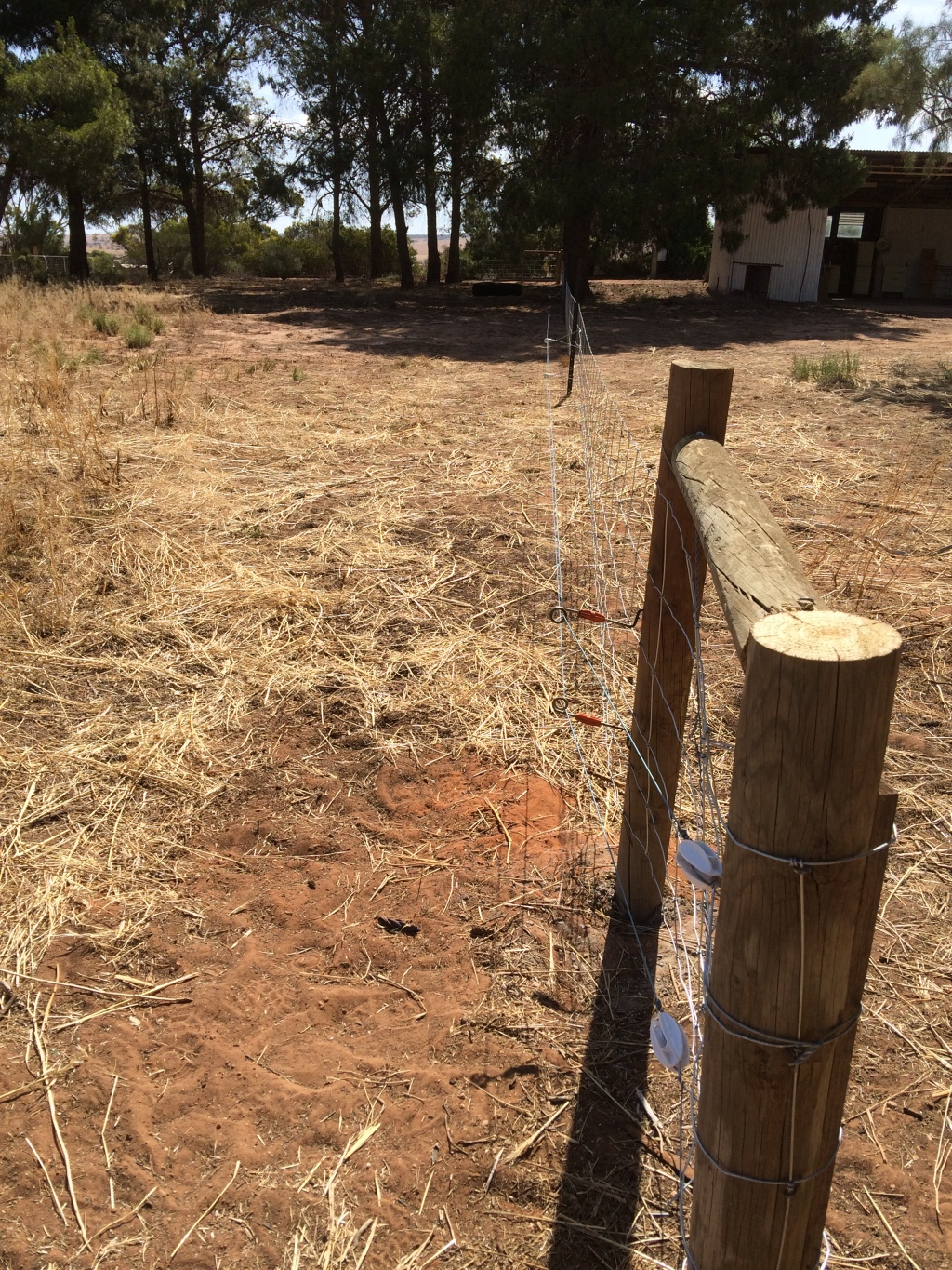We've seen a lot of pig paddocks/yards/enclosures, and most of them are super dodgy. There's something about housing pigs that makes people think they should throw material together rather than build something permanent.  Not these paddocks though - they're pro!
