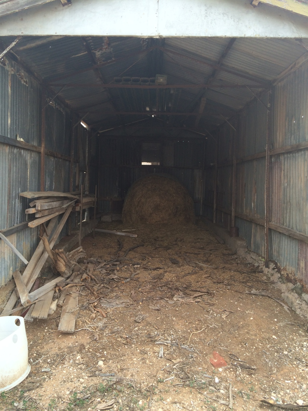 This is an old motor shed - around 3 x 7 or 8. We've also converted this into a farrowing shed, but will need to put up lean boards before putting a mum in there.
