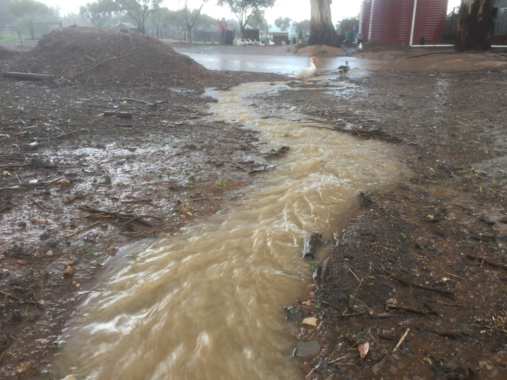 This is the flow of water from the road into our property. It's a freaking creek!