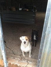Bruce and Tatyl wanting to come out the new door we just put in.